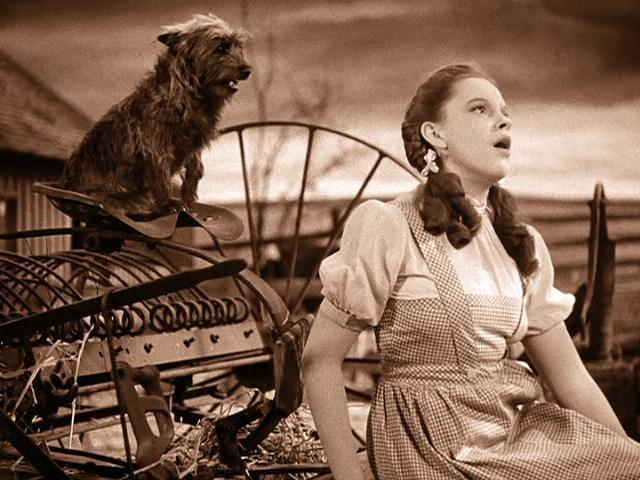 Judy-Garland-and-Toto-in-The-Wizard-of-Oz